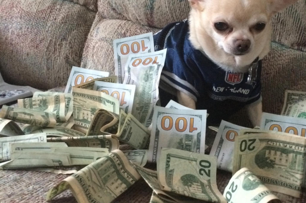 Comment devenir Pet Sitter pour gagner de l'argent ?